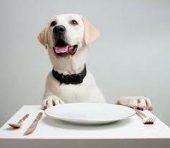 Seminario sull 39 alimentazione del cane csenfirenze - Cane che mangia a tavola ...