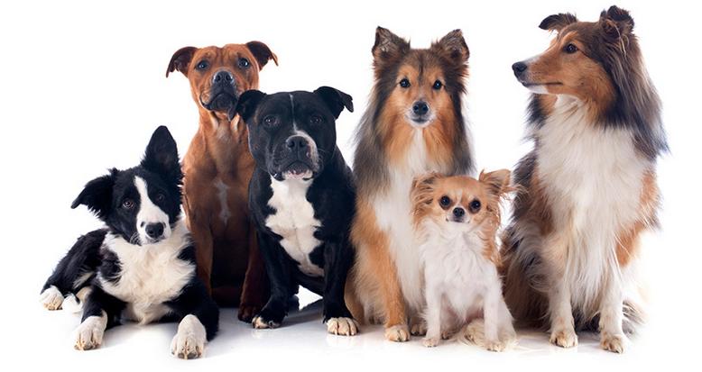 Corso dog sitter a firenze csenfirenze for Cerco dog sitter